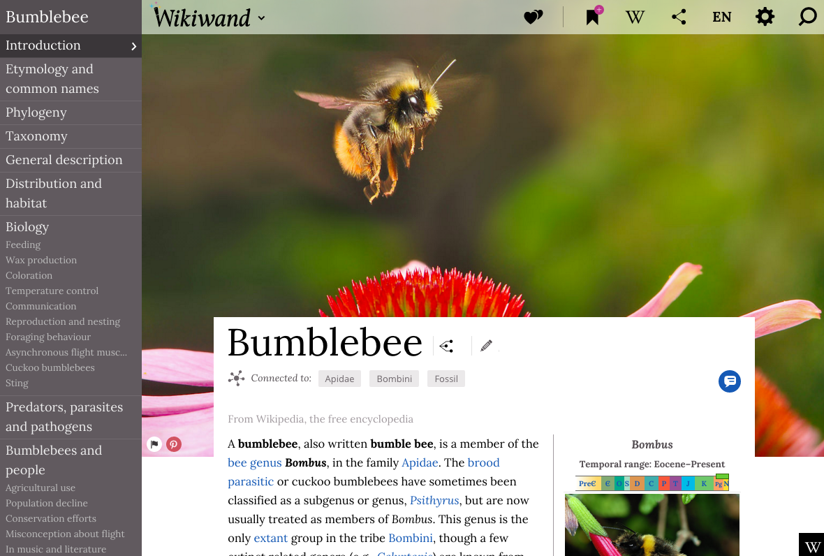 Best Websites of 2015 - Wikiwand Bumblebee in Wikipedia Reader