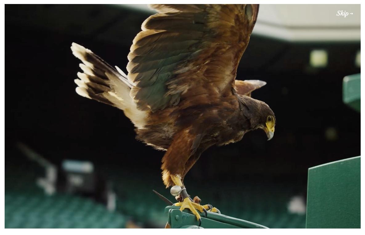 Best Websites of 2015 - Fly Like Rufus by Stella Artois