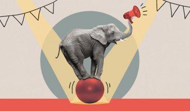Elephant balancing on ball while holding a megaphone